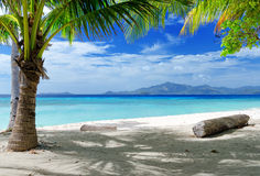 Green tree on white sand beach.  Royalty Free Stock Images