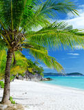Green tree on white sand beach Stock Photography