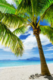 Green tree on white sand beach Stock Photo