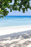 Seascape i drzewa braches Zdjęcia Royalty Free