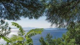 Seascape i ramen av växter, Kroatien Arkivfoto