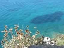 Seascape i suszący kwiaty Zdjęcia Royalty Free