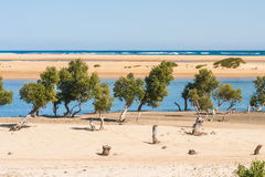 Seascape of Ifaty Royalty Free Stock Image