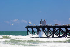 Seascape with jetty and seagulls. Seagulls are on the old wooden wharf on the sea cost. Bulgaria, Sunny Beach Royalty Free Stock Photo