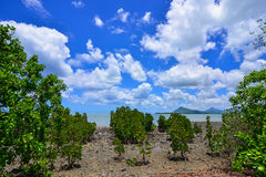 Seascape in Le Morne, Mauritius. Mangrove forest at sunny day in Le Morne, Mauritius Royalty Free Stock Photos
