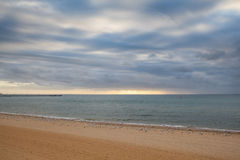 Seascape with many seagulls on sandy beach Stock Images