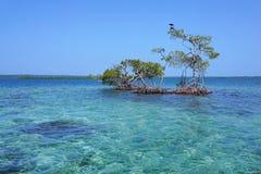 Seascape med avskilda mangroveträd i havet Arkivbilder
