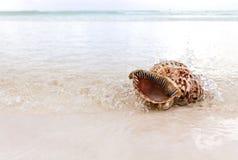 Seascape med cockleshellen kopiera avstånd Arkivfoton