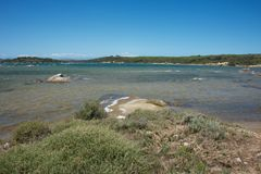 Seascape med det blåa havet och med lösa växter Fotografering för Bildbyråer