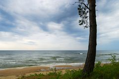 Seascape med ensling sörjer trädet som växer på dyn Landskap för baltiskt hav under molnigt väder Arkivbild