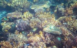 Seascape med korallreven Undervattens- foto för tropiska kustinvånare Arkivfoto