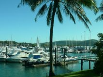 Seascape with mooring yachts in the marina,,  plam tree in the foreground,Whitsunday. Islands Australia Stock Photo