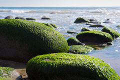 A seascape with moss covered rocks on California coast Stock Images