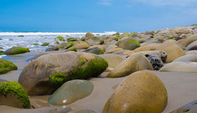 A seascape with moss covered rocks on California coast Royalty Free Stock Photo