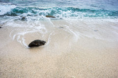 Seascape na ilha do filho da LY, Quang Ngai, Vietname Imagem de Stock