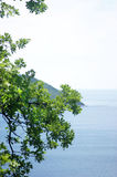 Seascape with oak branches Stock Photo