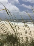 Seascape. Ocean viewed through sea oats Royalty Free Stock Photography