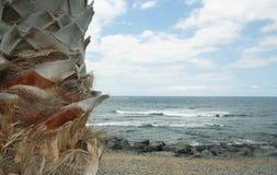 Seascape och detalj av en palmträd Arkivbilder