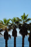 Seascape and palm trees Royalty Free Stock Images