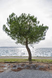 Seascape with pine tree in back lit Stock Photos