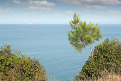 Seascape with pine tree Stock Photo