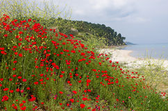Seascape with poppies Stock Photos