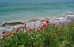 Seascape with red poppies on the Black Sea - Costinesti, Romania Stock Photography