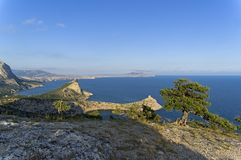 Seascape with relict treelike juniper. Crimea. Relict tree-like juniper on top of a mountain against the background of the sea. Crimea, Novyy Svet, Karaul-Oba Stock Image