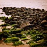 Seascape rochoso com algas em Waterville, Kerry do condado - efeito do vintage Imagem de Stock Royalty Free