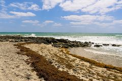 Seascape of a Rocky Florida Beach. Seascape of Chastain Beach on Hutchinson Island in Florida as waves break on the limestone rocks and seaweed decorates the stock photography