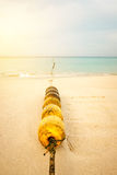 Seascape with rope and buoy in seaweeds Royalty Free Stock Photo