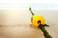 Seascape with rope and buoy in seaweeds Royalty Free Stock Image