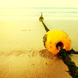Seascape with rope and buoy in seaweeds Royalty Free Stock Images