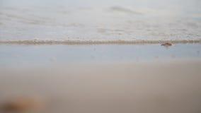 Seascape of sand shore Stock Image