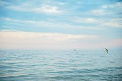 Seascape with sea horizon and blue sky. Background. Painterly seascape scene with relaxing sunset colours stock photo
