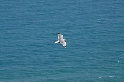 Seascape with a seagull over the waves Stock Images