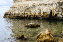 Seascape with seagull and rocks Royalty Free Stock Photo