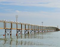 Seascape with seagulls on the pier Stock Photos