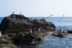 Seascape and seagulls on rocks Royalty Free Stock Photos