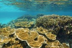 Seascape subaquático de um mar das caraíbas do recife de corais Foto de Stock