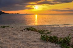 Seascape with The Sun, Beach, Wild Vines, Clouds and Sky at Beautiful Sunrise royalty free stock photo