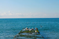 Seascape. Sunny day. Black Sea. Royalty Free Stock Images