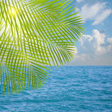 Seascape in sunny day with palm tree Royalty Free Stock Photos