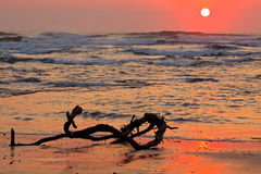 Seascape at sunrise. With driftwood and warm colors from the early morning sun Stock Photography