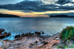 Seascape at sunset in winter with grass and a plant. In sardinia Stock Photography