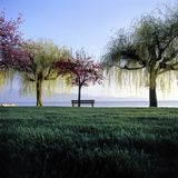 Seascape Switzerland Vaud Lutry Trees Bench Grass Green royalty free stock photos