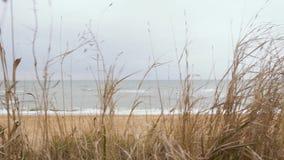 Seascape till och med torrt gräs lager videofilmer