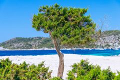 Seascape with tree and blue mediterranean sea in the background stock photography
