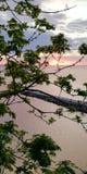 Seascape Um por do sol pitoresco através das folhas verdes das árvores Fundo imagem de stock