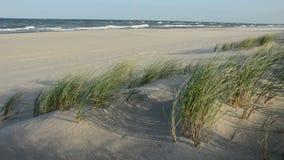 Seascape vazio e vento do verão na grama vídeos de arquivo